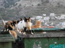 Symi Katzen